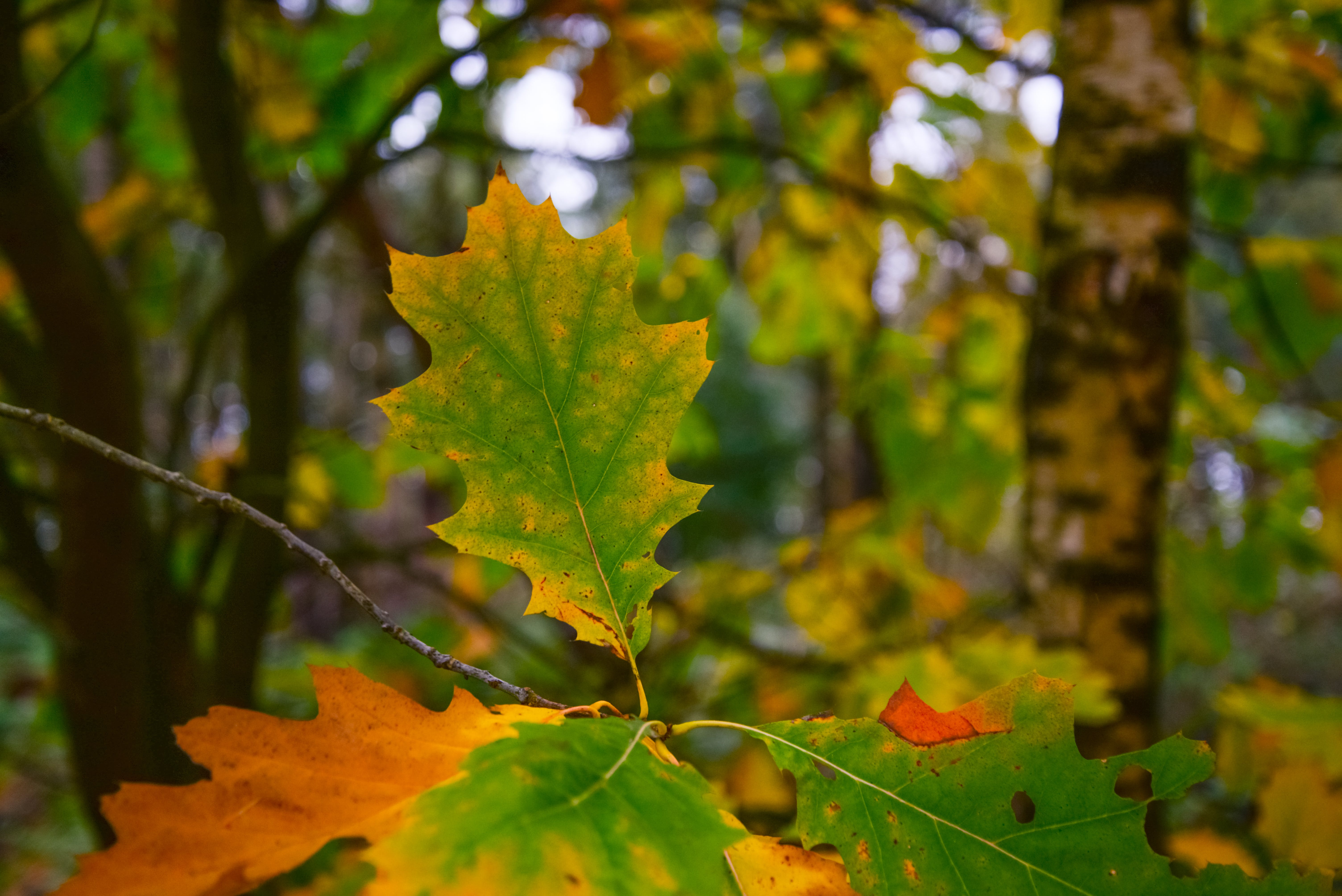Free stock photo of nature, forest, yellow, leaf