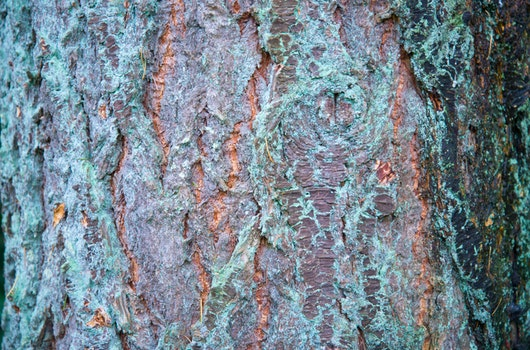 Free stock photo of wood, dirty, texture, tree
