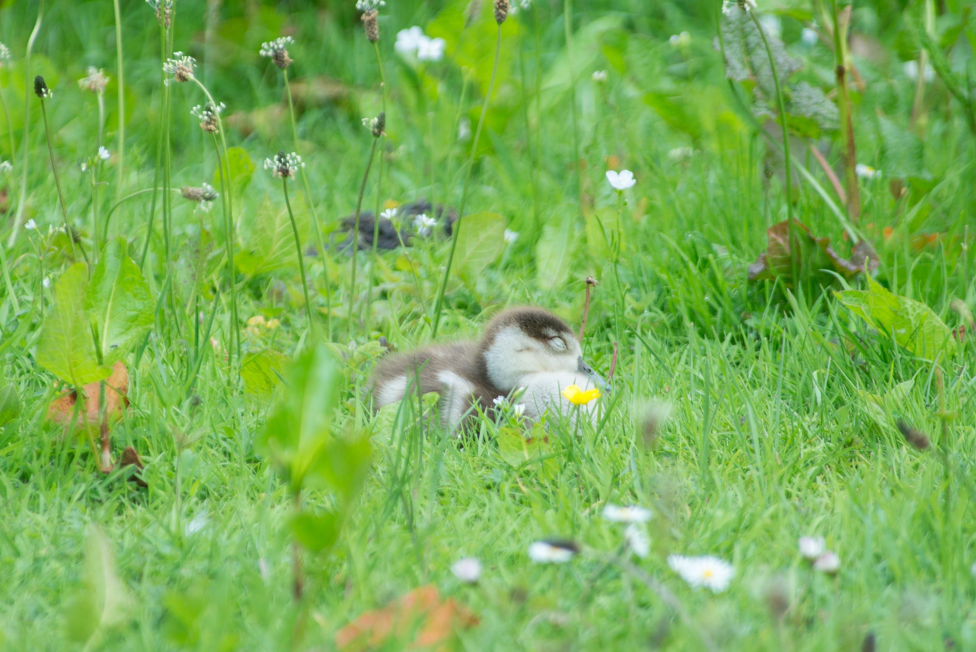 Free stock photo of bird, water, animal, grass
