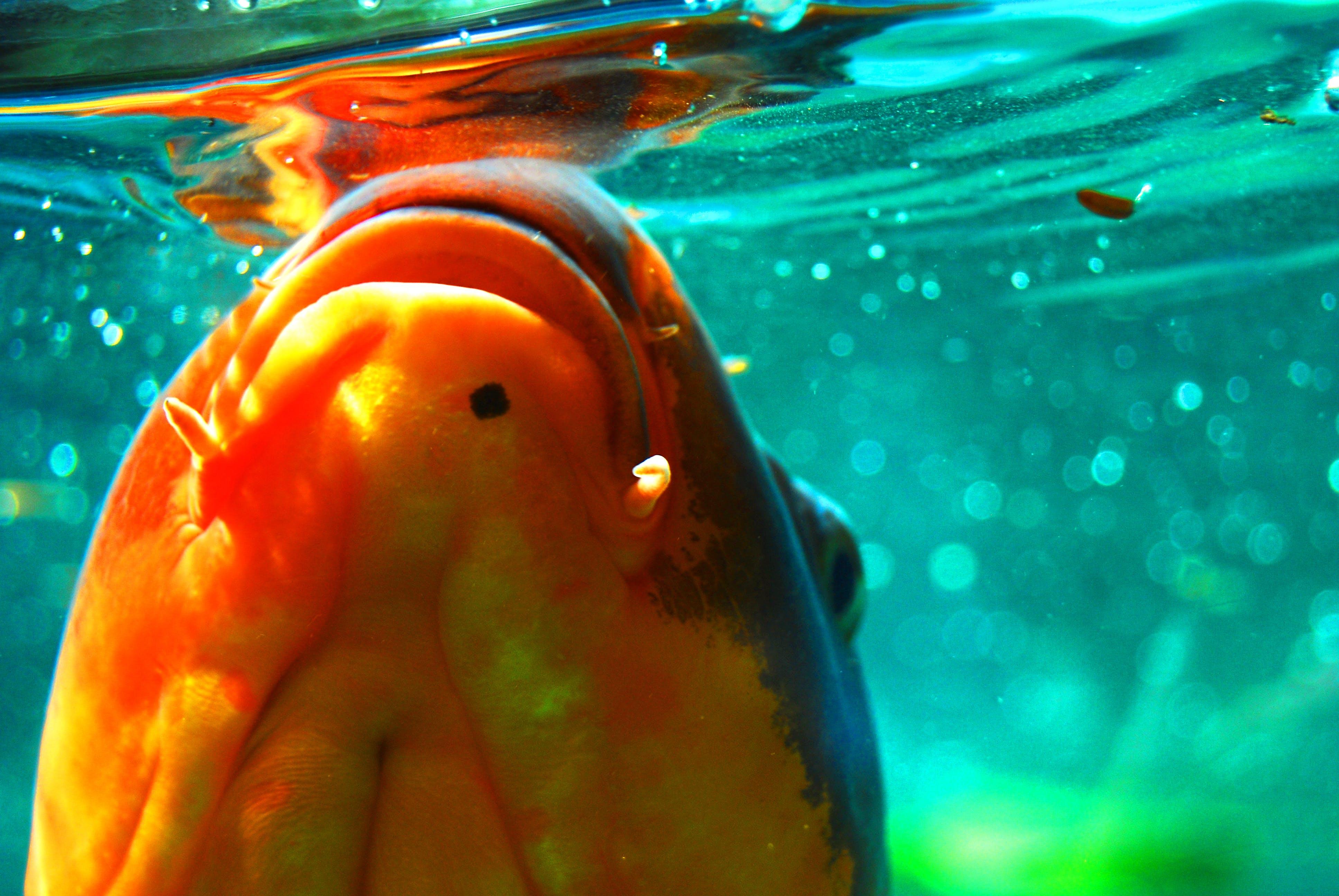 Free stock photo of deep ocean, deep sea, fish, sea