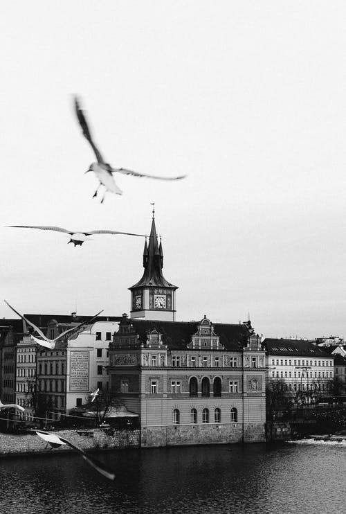Black and white of birds flying over river located in old European city with classic architecture