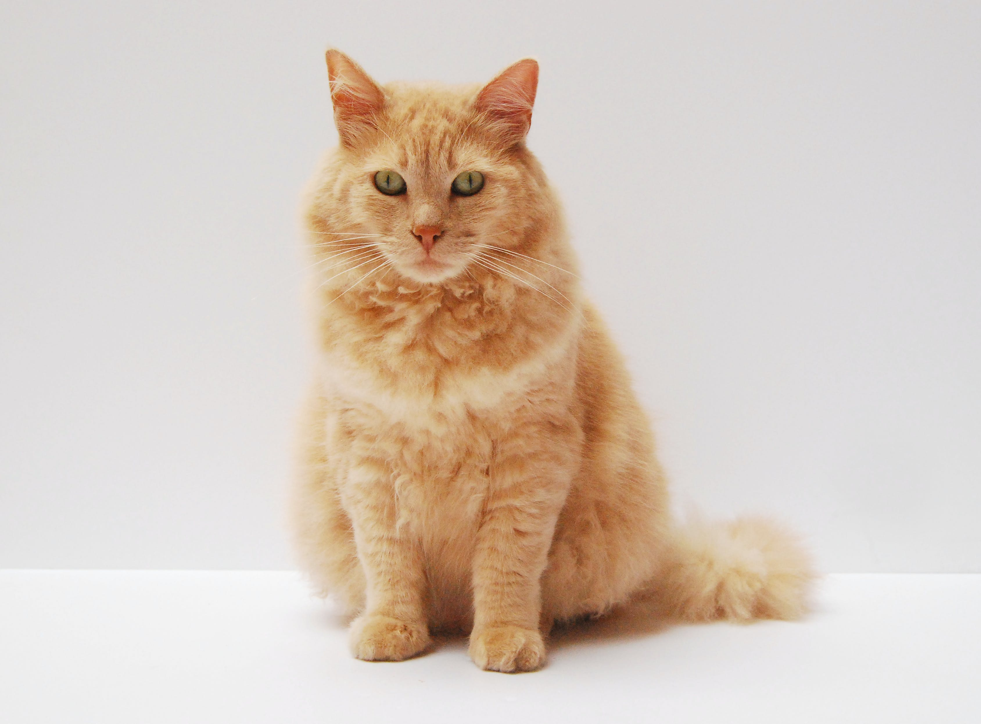 Orange Cat Sitting on White Surface