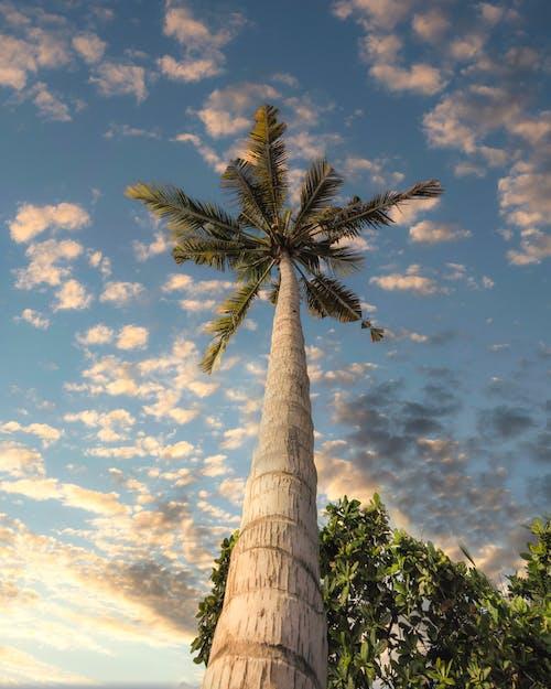 Big palm tree under cloudy sky