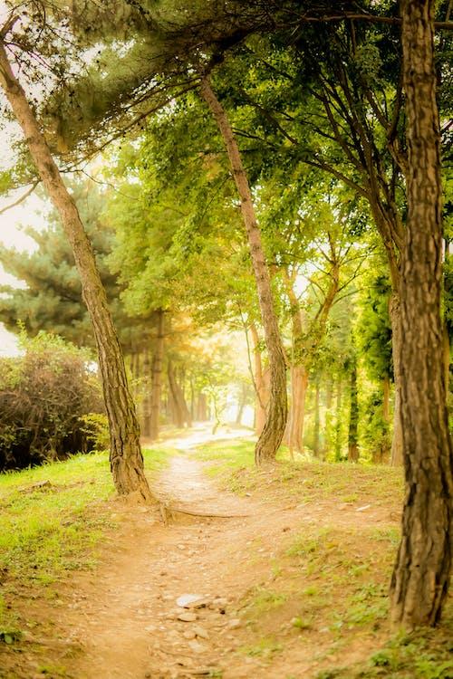 未舗装経路, 林道, 森林, 歩道の無料の写真素材