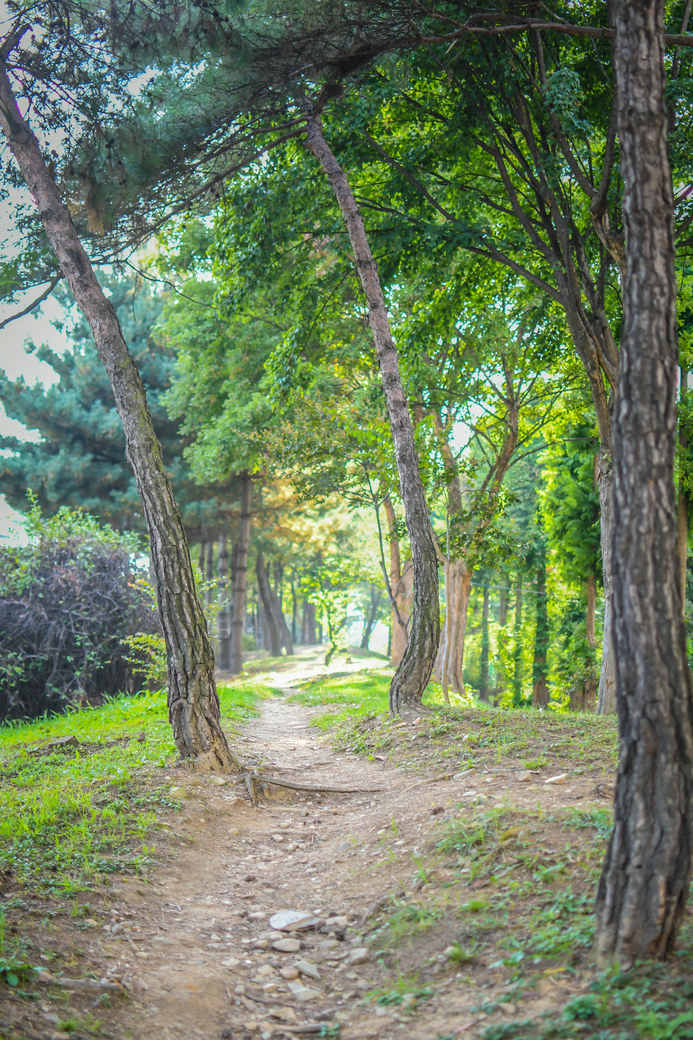 Free stock photo of autumn mood forest, foot path, footpath, forest