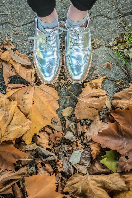 シルバーシューズ, 楓の葉, 秋の季節, 紅葉の無料の写真素材