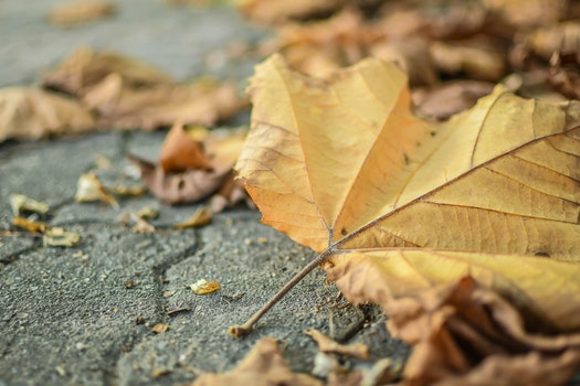 Free stock photo of dry, leaf, leaves, ground