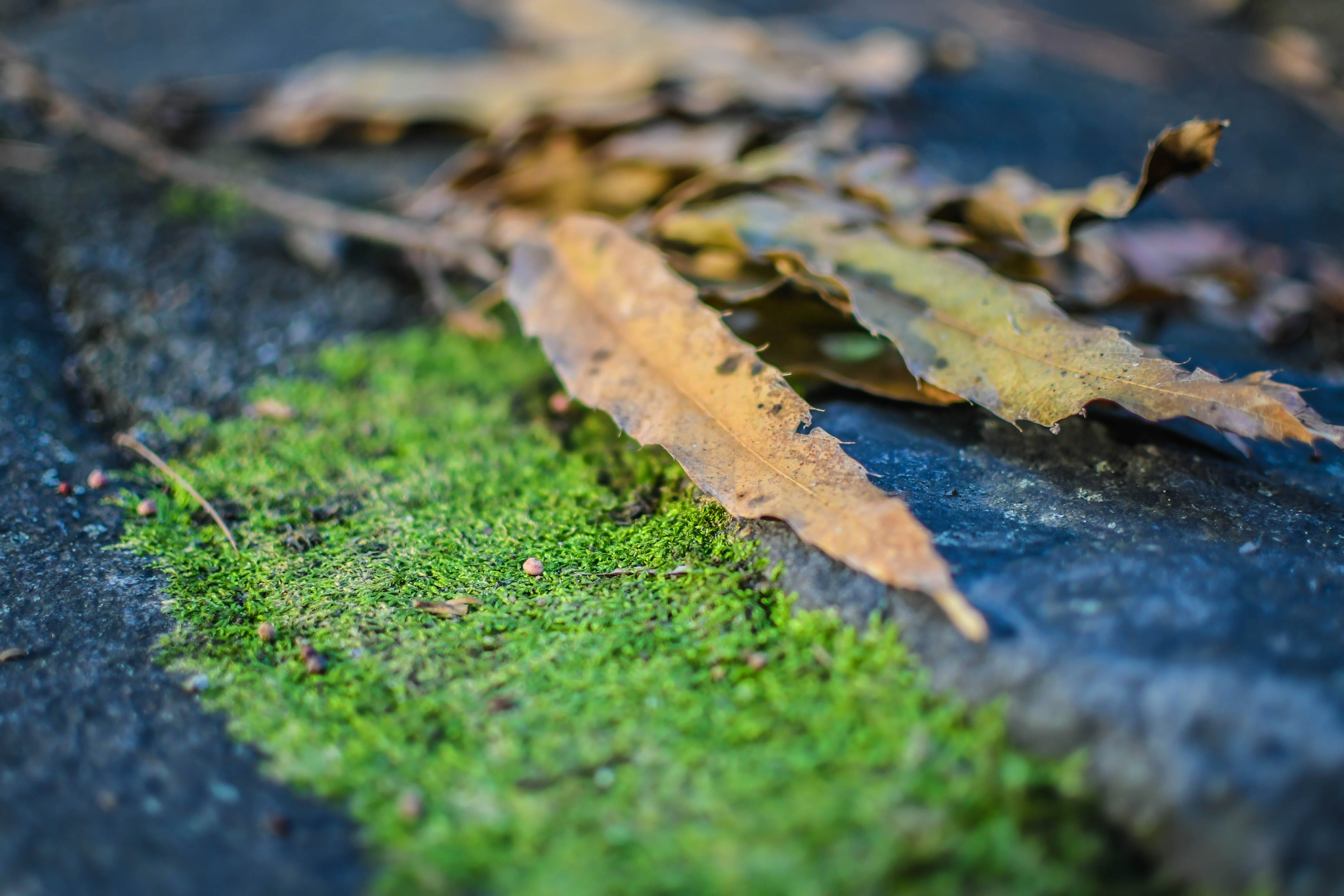 Free stock photo of moss, leaves, rock, outdoors