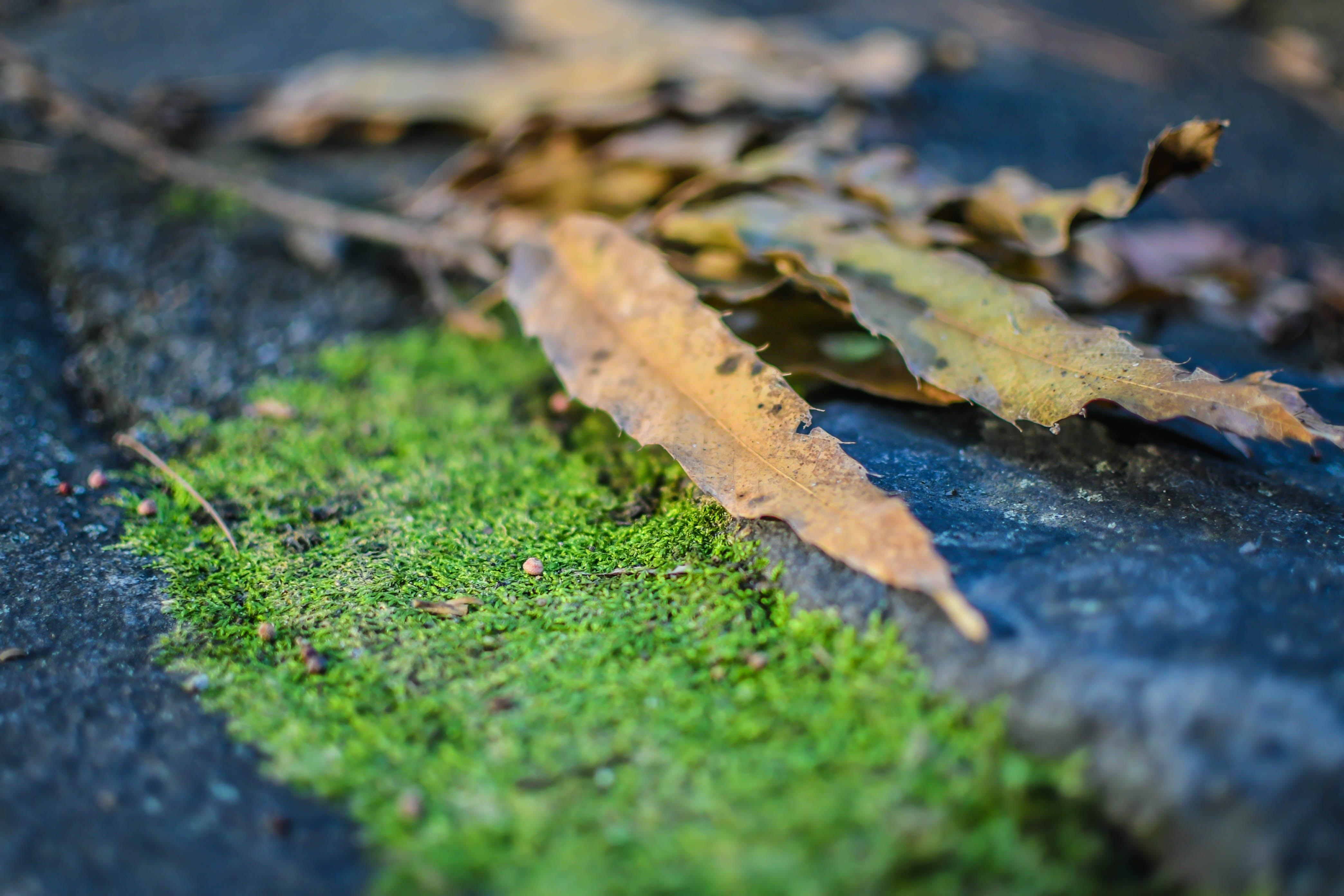 depth of field, dry leaves, leaves
