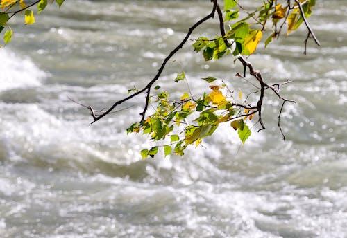 Free stock photo of вода, листья, природа