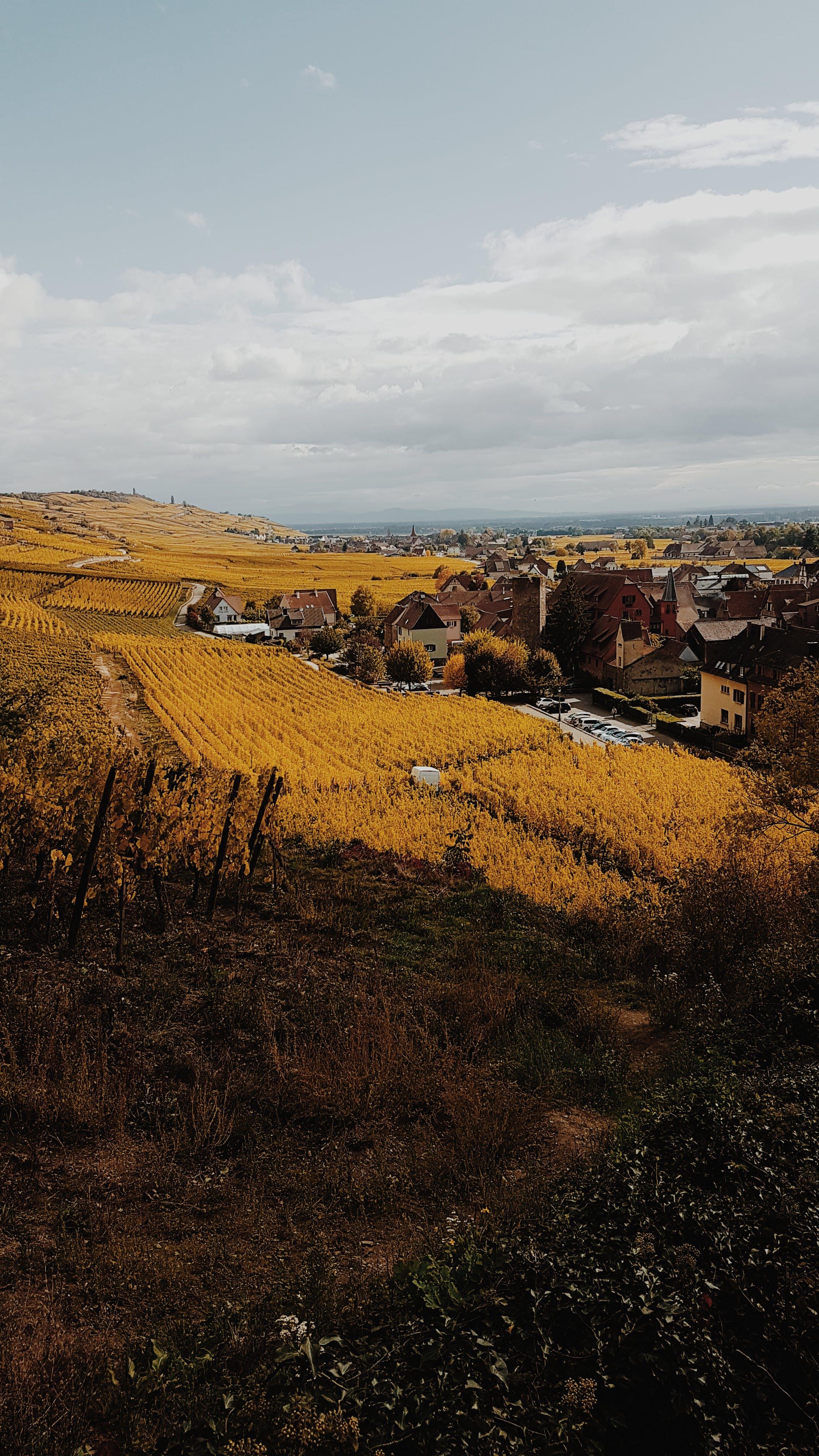 Kostnadsfri bild av åkermark, bondgård, by, dagsljus