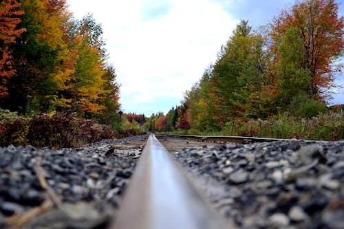 Darmowe zdjęcie z galerii z drzewa, kanada, kolej, lokomotywa