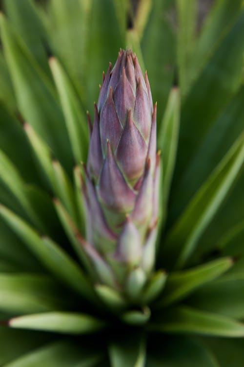 Grüne Und Lila Pflanze In Der Nahaufnahmefotografie