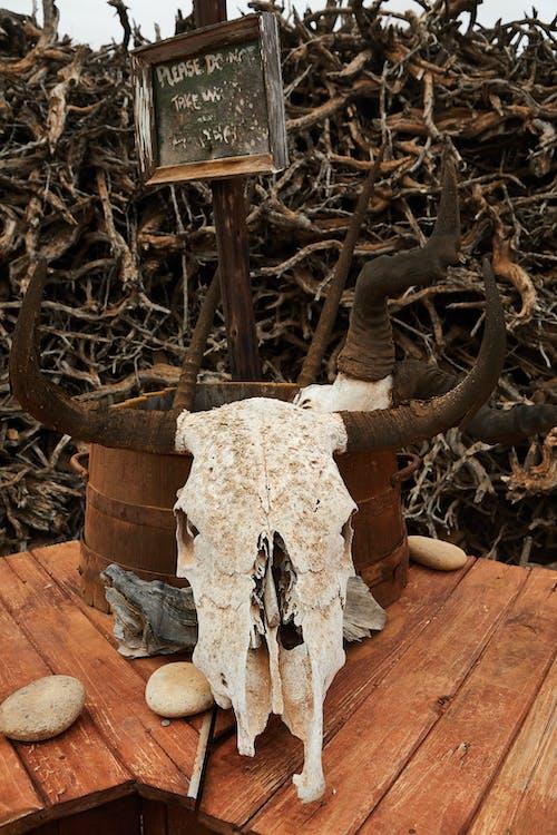 Weißer Und Brauner Tierschädel Auf Braunem Holztisch