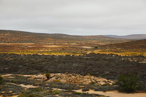Dry sandy desert with plants