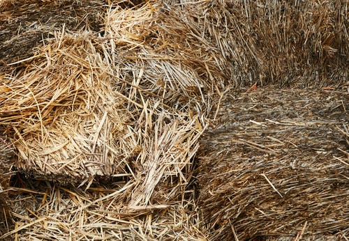 Stacks of dry hay in barn