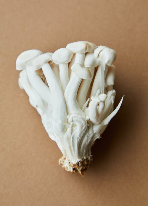 Bunch of white mushrooms placed on beige background