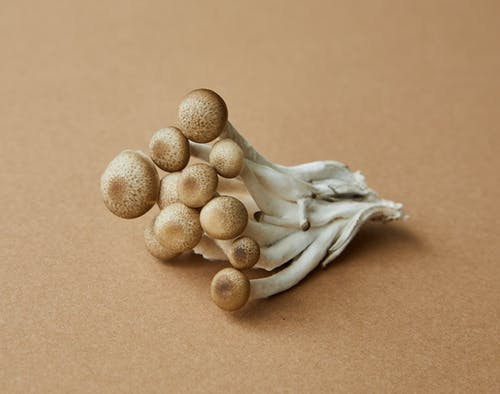 High angle of fresh uncooked edible light brown shimeji mushrooms on brown background