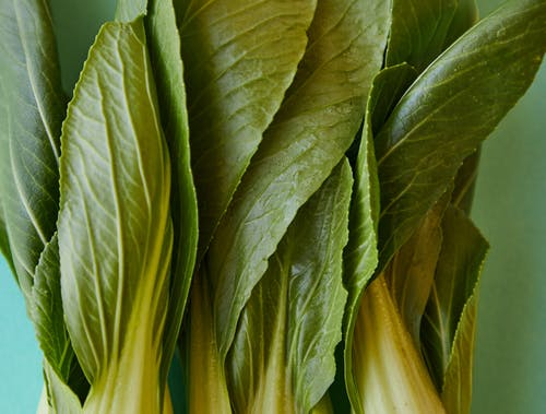 Pok choi with fresh green leaves