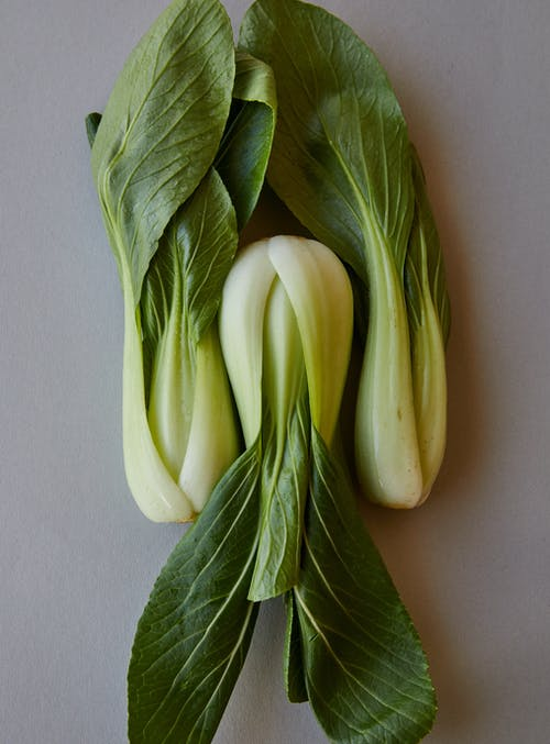 Top view of ripe pok choi with ripe verdant leaves on thick stems on gray background