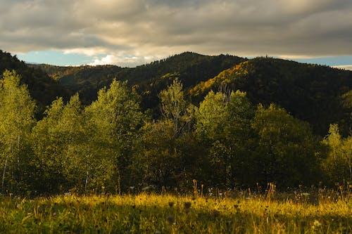 Foto profissional grátis de árvores, floresta, grama, montanha