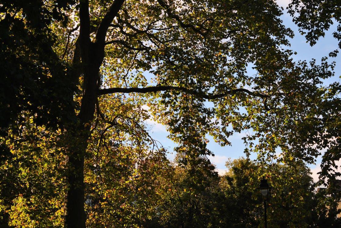 樹木 的 免費圖庫相片