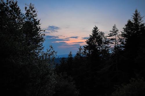 Fotobanka sbezplatnými fotkami na tému mraky, Nikon, noc, stromy