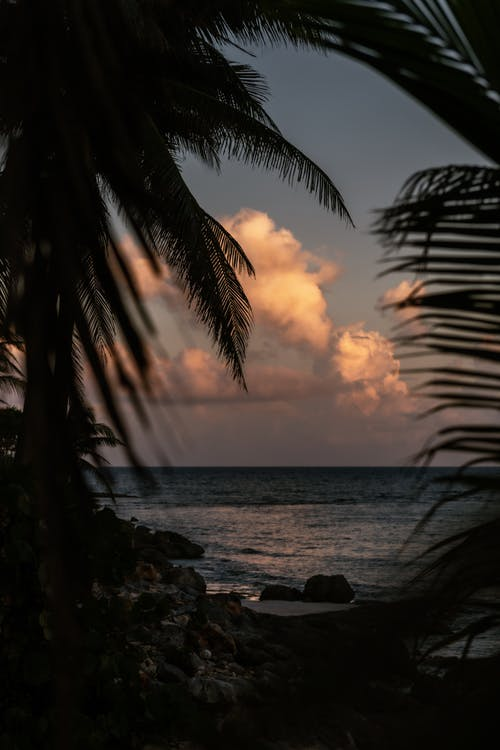 Silhouette of Palm Leaves Near Body of Water