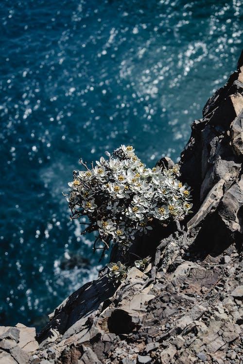 Imagine de stoc gratuită din albastru, cenușiu, floare sălbatică