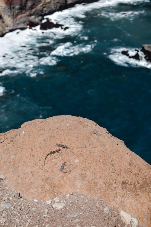 Imagine de stoc gratuită din albastru, apă, brun