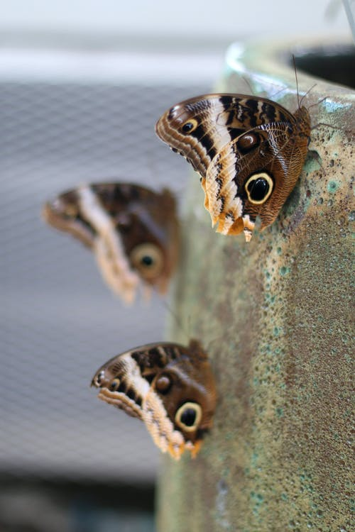 Brown and White Butterflies on Gray Surface