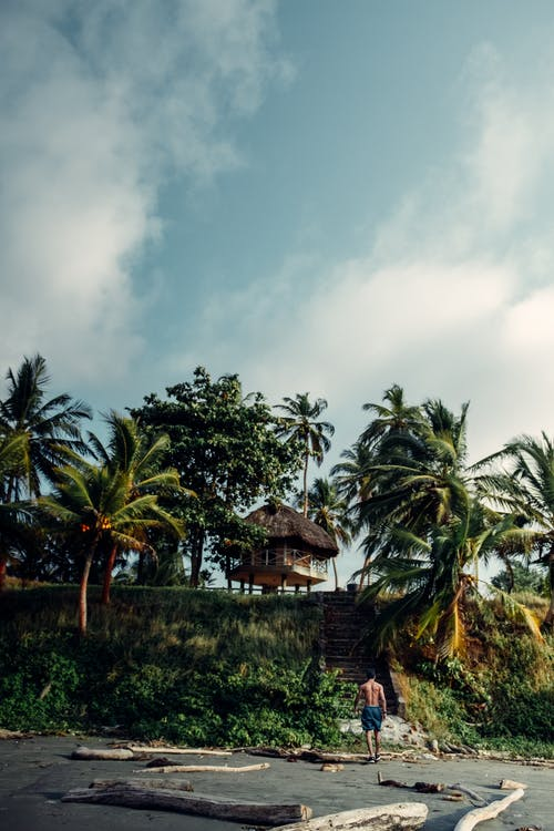 Green Palm Trees Under Cloudy Sky