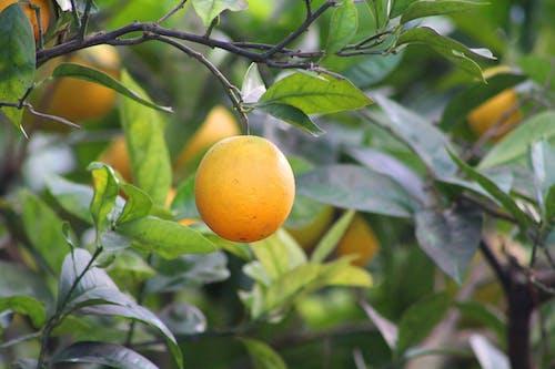 Close-Up Photo of a Citrus Fruit