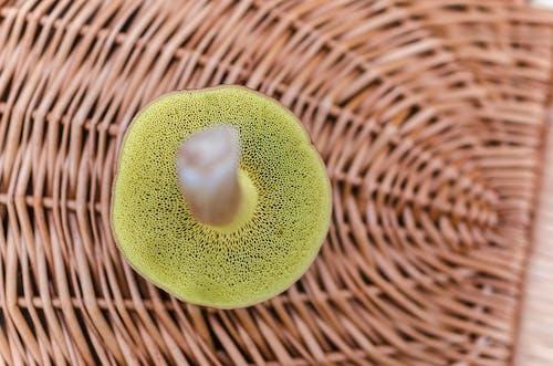 Foto stok gratis Cendawan, detail, fungi, jamur