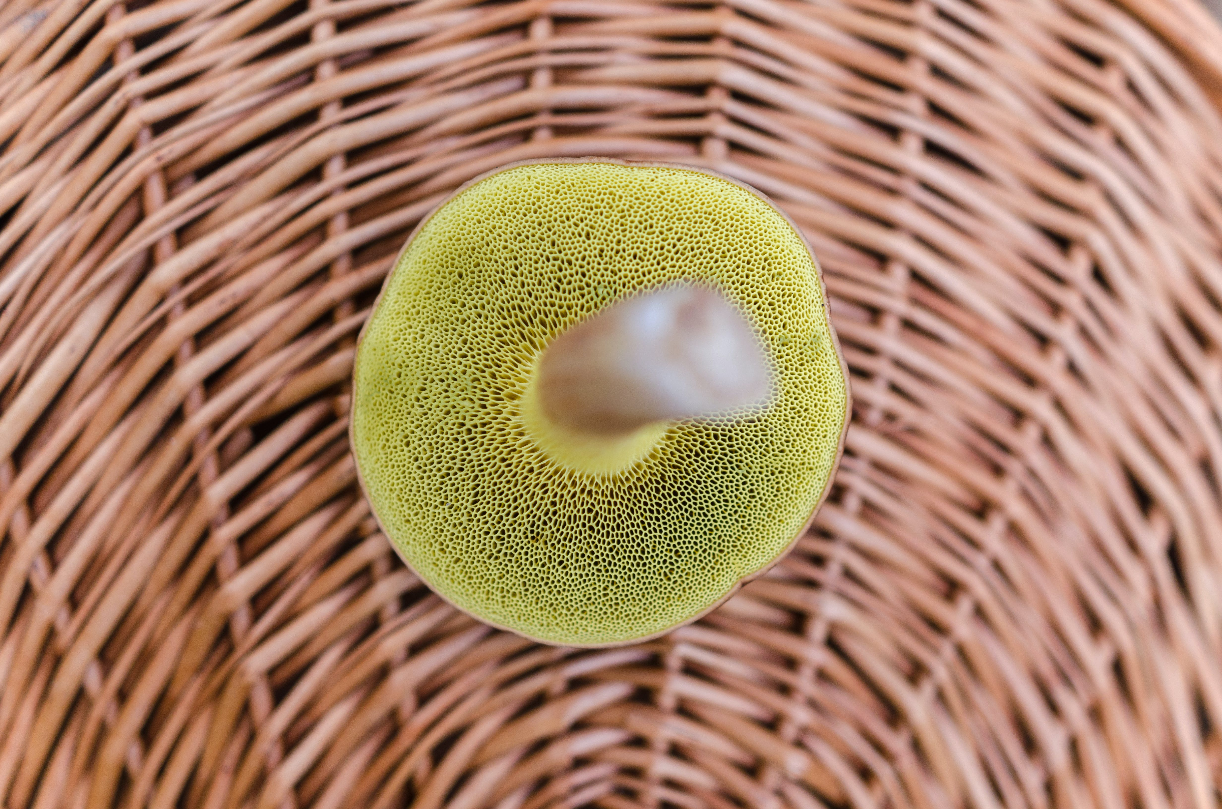 Close Up Photography of Green Sponge