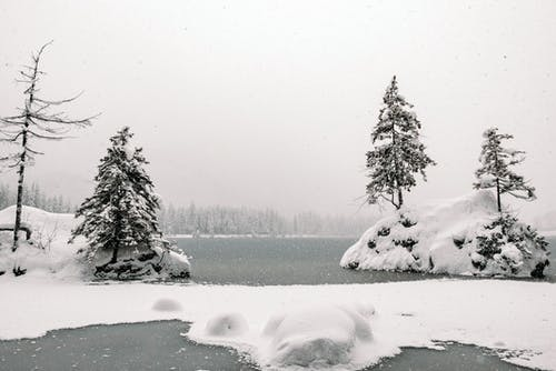 Black and white of trees growing on snowy rocky formations in ocean in cold weather