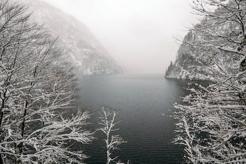 bw, エコロジー, コールドの無料の写真素材