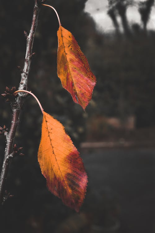 Free stock photo of leaves, nature, nature lover