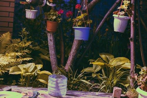 Free stock photo of dark green, flower garden, flowerpots