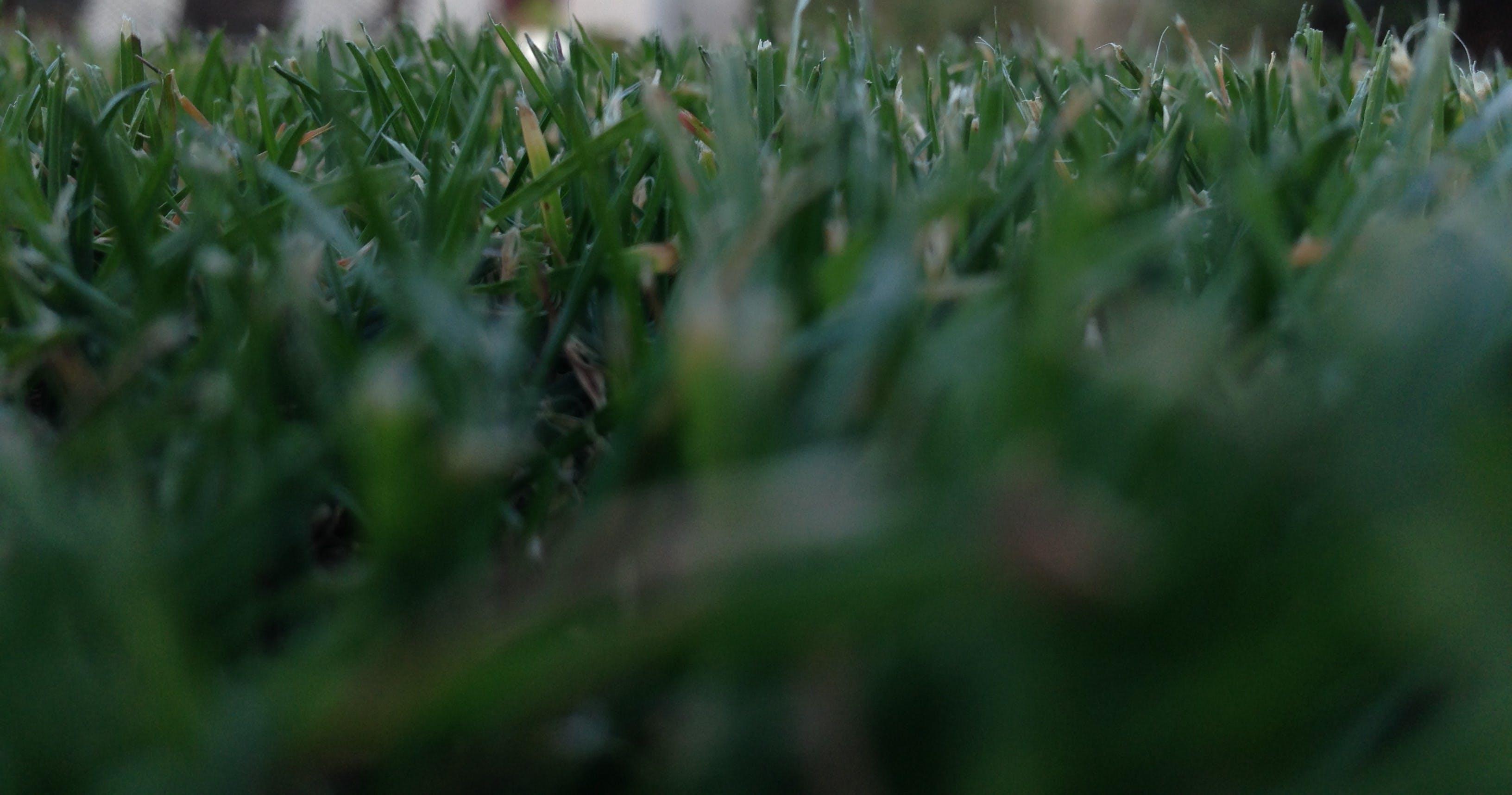 Kostenloses Stock Foto zu dunkelgrün, gras, grashalm, grün