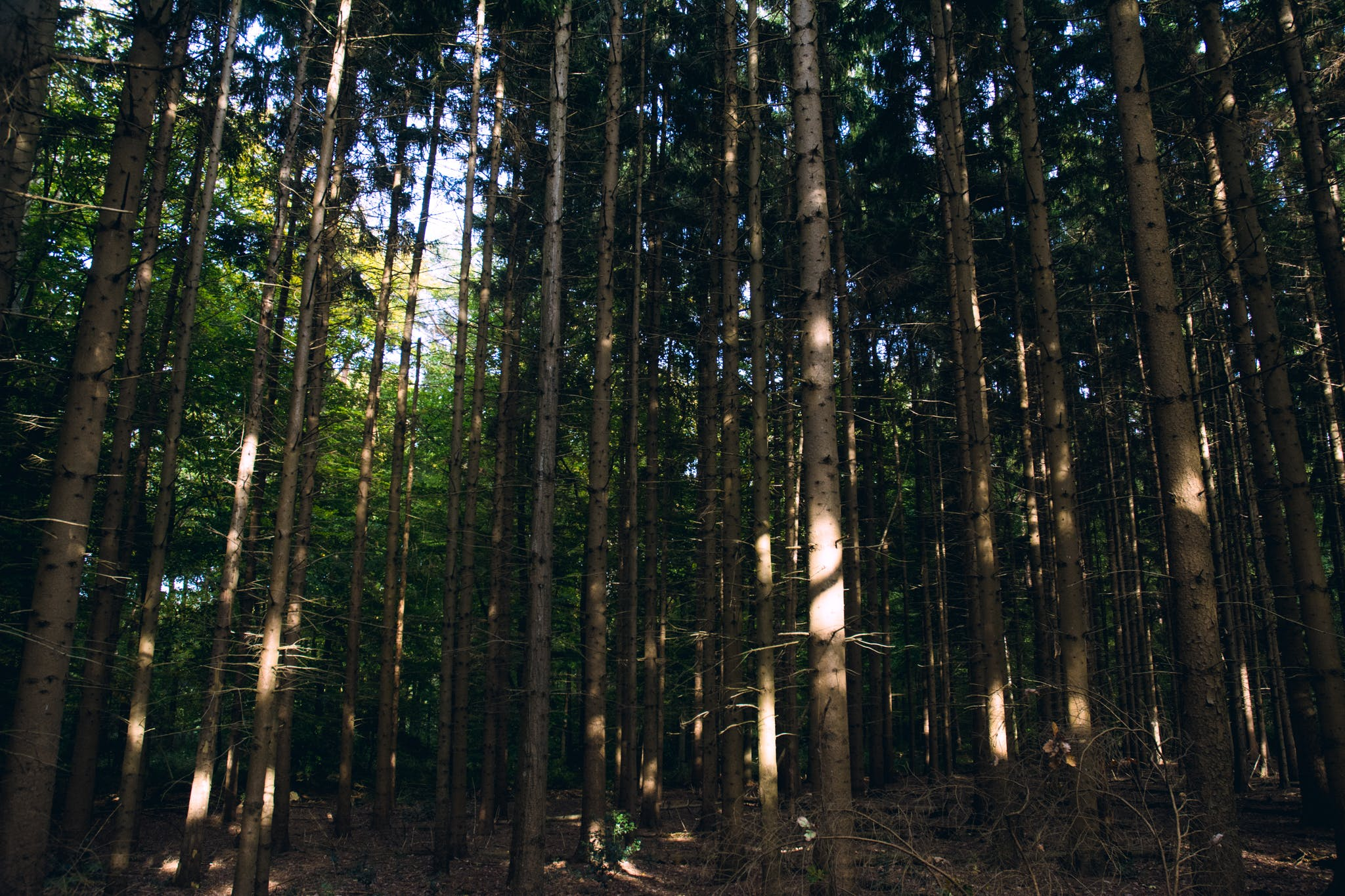 Free stock photo of challenge, forest, tree, trees