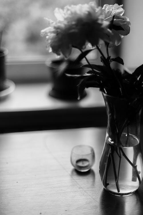 Základová fotografie zdarma na téma aroma, aromatický, botanický