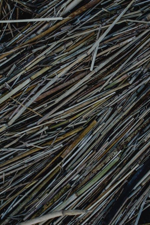 Brązowe I Zielone Patyczki Drewniane
