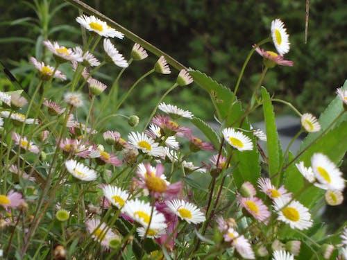 Kostenloses Stock Foto zu #flowerphotographie