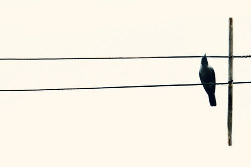 Free stock photo of alone, bird, crow