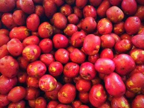 Free stock photo of farm, market, potatoes