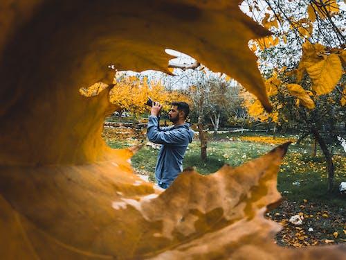 Foto profissional grátis de amarelo, árvore, aventura, câmera