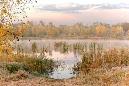 Green Grass on Lake