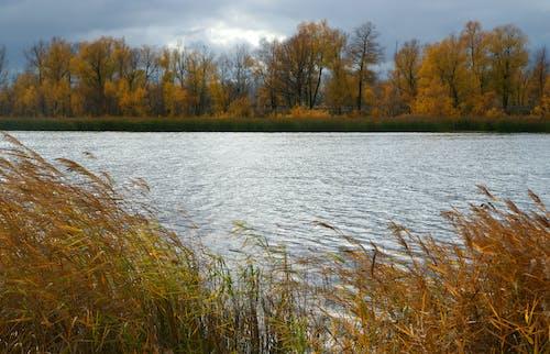 Green Grass Near Body of Water