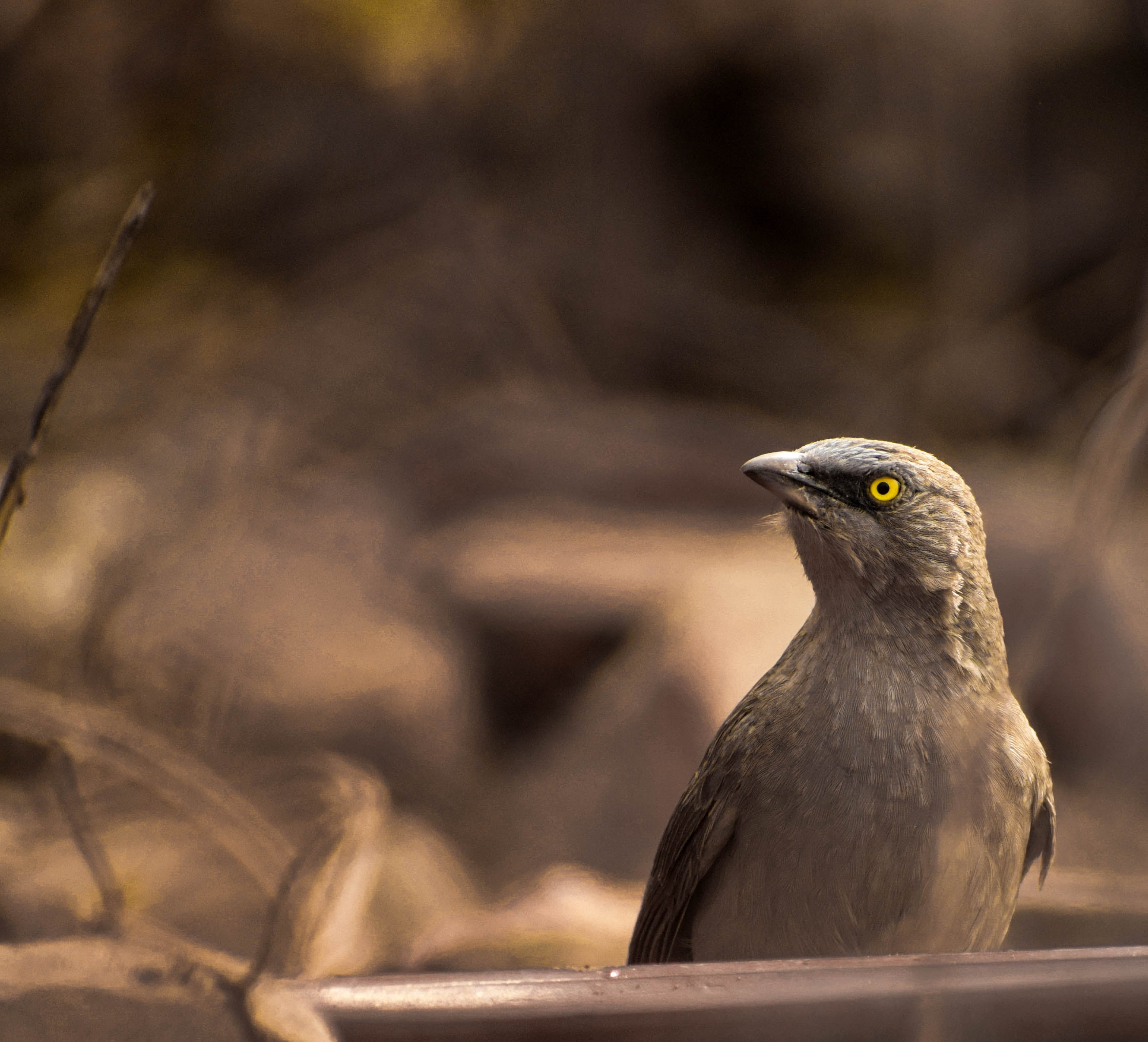 Selective Focus Photography of Brown Bird